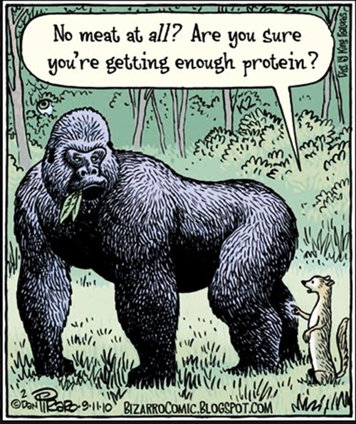 Gorilla image from PETA