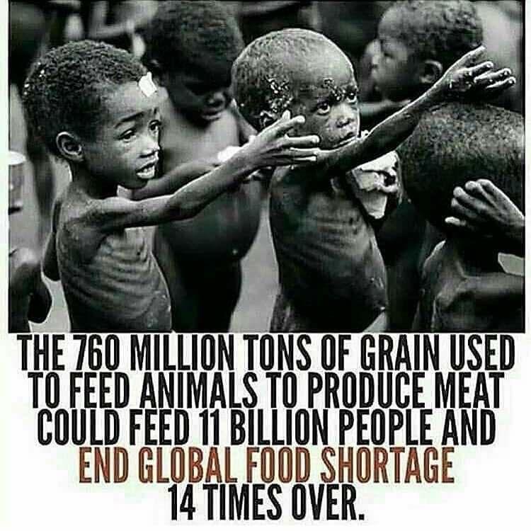 vegan grain image